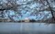 Cherry-trees-evening-dc-tidal-basin_-_Virginia_-_ForestWander