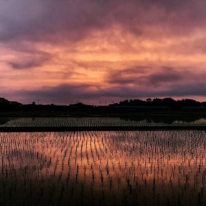 Life on JET: 2007-2016  Melinda Marquardt Chiba 2014-2017  A sight I often saw in Isumi, Chiba; gorgeous sunsets and rice paddies. I was particularly taken by this one on my bike ride to the grocery store one evening, early in the summer.