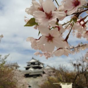 Life on JET: 2007-2016  Hayley Schaefer Gifu 2013-2014  My friend and I took a trip to Shikoku, up the lift to the Matsuyama mountain castle. It was a sight to see, especially in the full bloom of the cherry blossoms. Clear skies and the cool breeze of the mountaintop made for a wonderful visit.